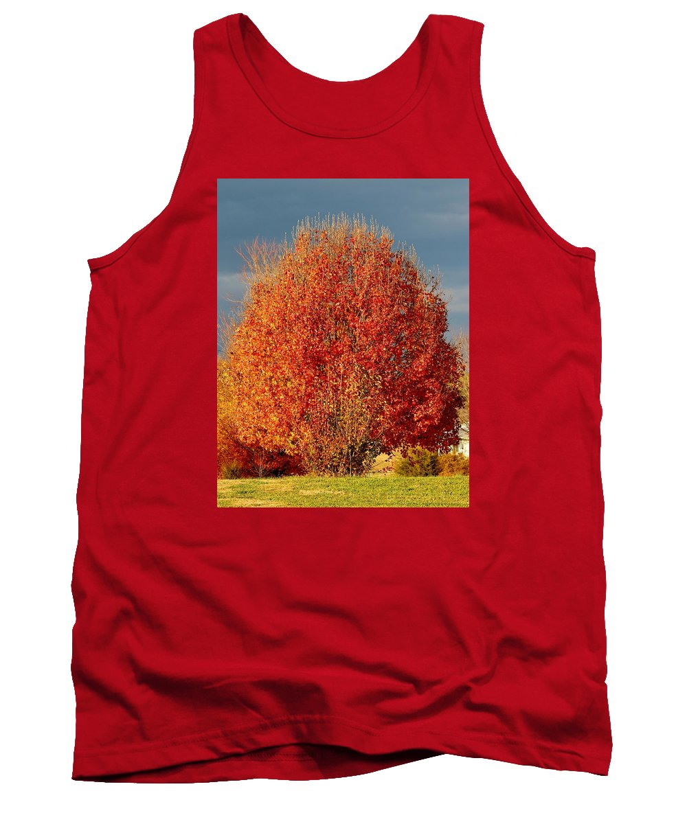 Tree Tank Top featuring the photograph Maple Tree by Cynthia Guinn