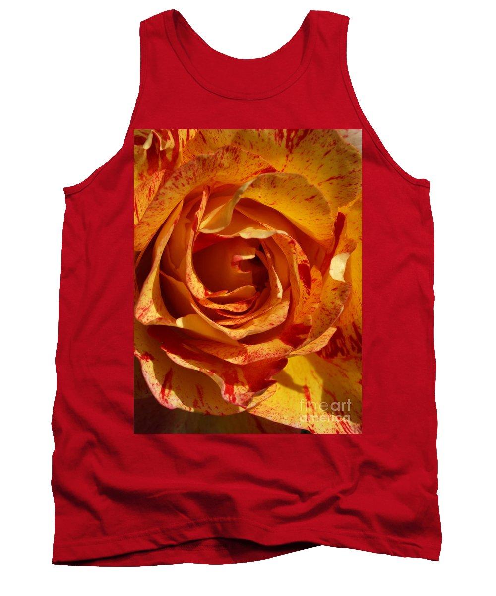 Orange Tank Top featuring the photograph Orange Variegated Rose by Jacklyn Duryea Fraizer