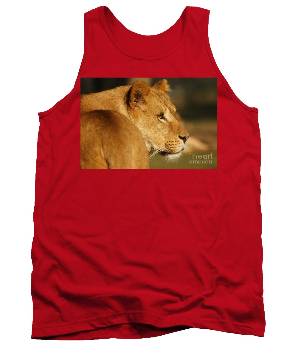 Portrait Tank Top featuring the photograph Portrait Of A Dreamy Lioness by Nick Biemans