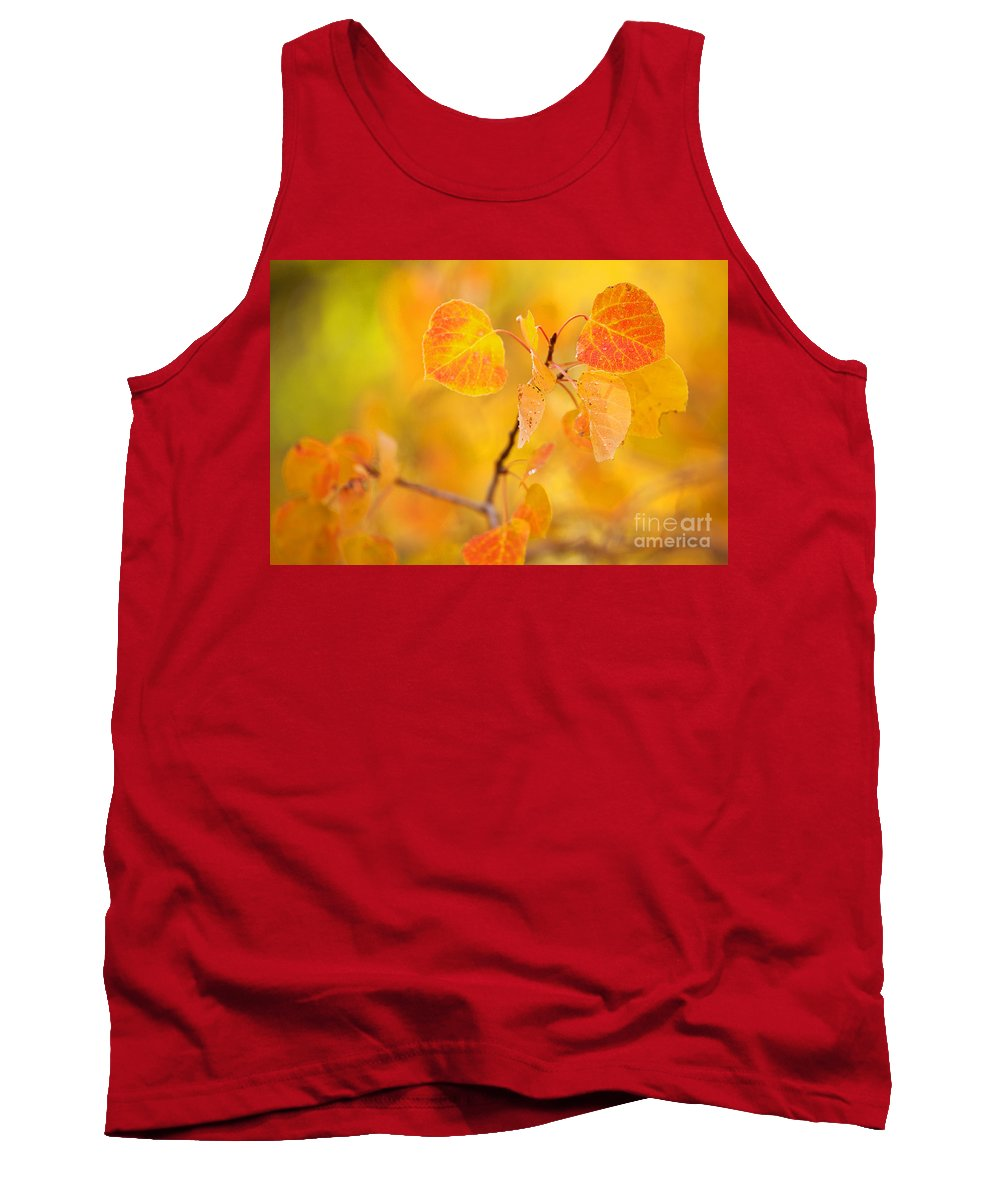 Autumn Colors Tank Top featuring the photograph The Gold Standard by Jim Garrison