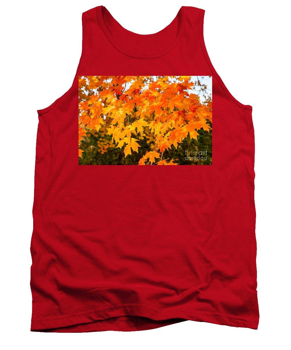 Fall Photograph Tank Top featuring the photograph Yellow Orange Fall Tree by Terri Morris