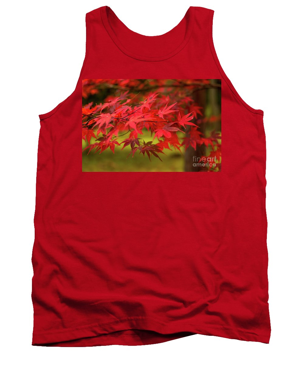 Aomori Tank Top featuring the photograph Fall Color Maple Leaves At The Forest In Aomori, Japan by Eiko Tsuchiya