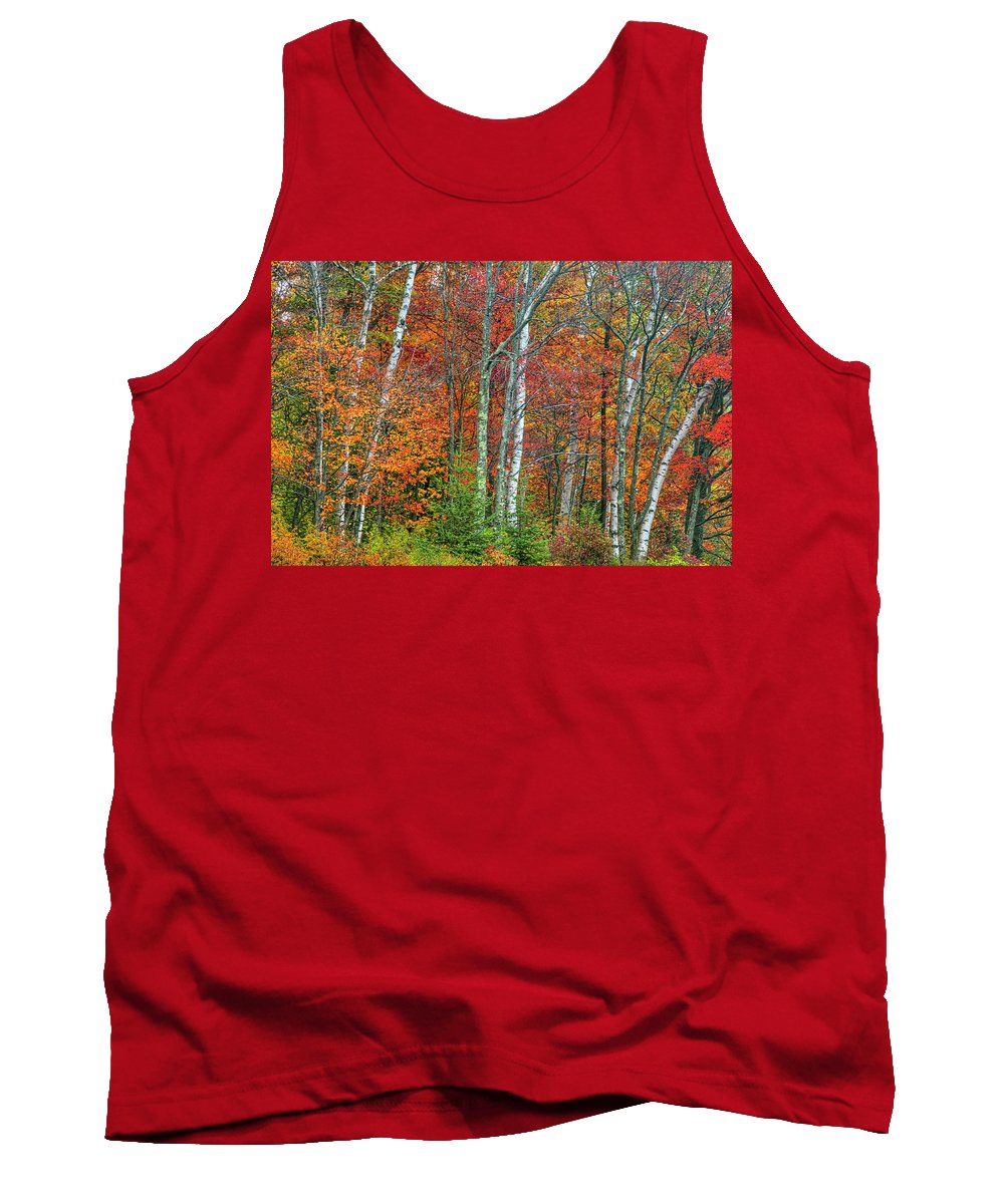 Autumn Photograph Tank Top featuring the photograph Adirondack Birches In Autumn by Tony Beaver