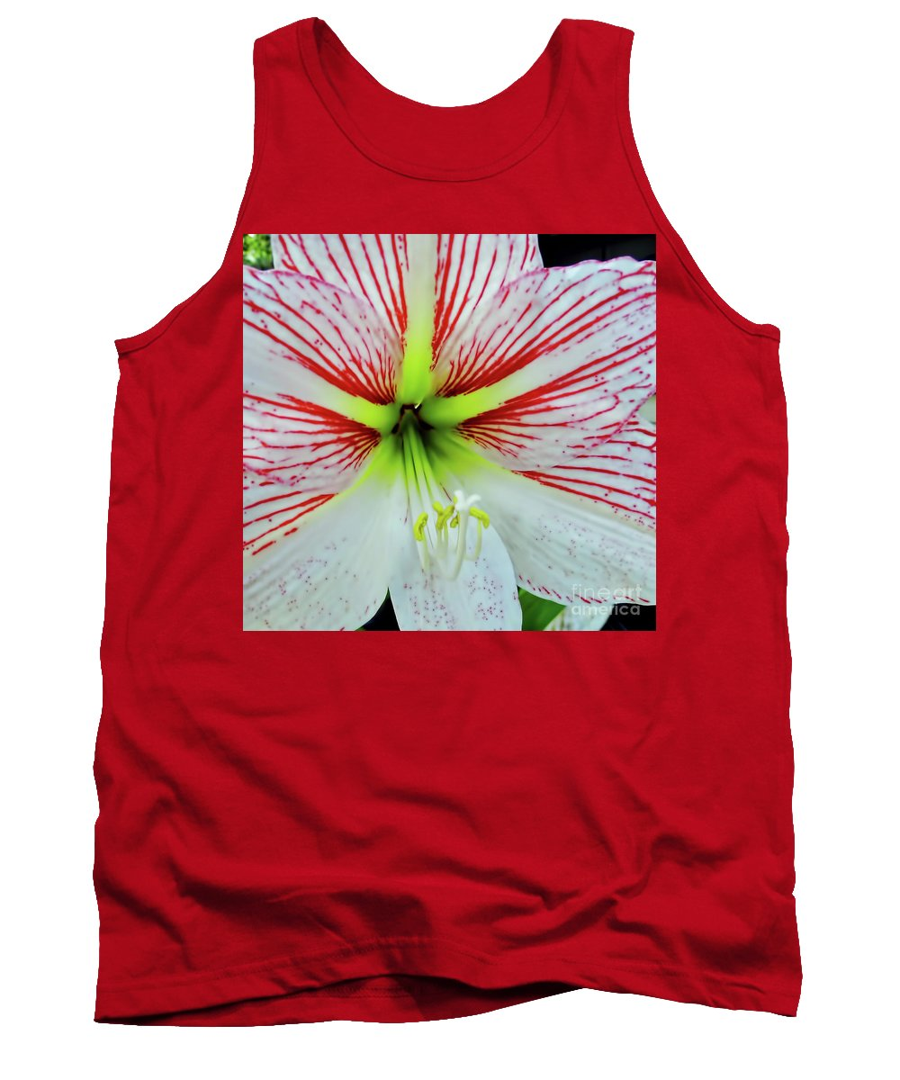 Amaryllis Tank Top featuring the photograph Amaryllis Beauty by D Hackett