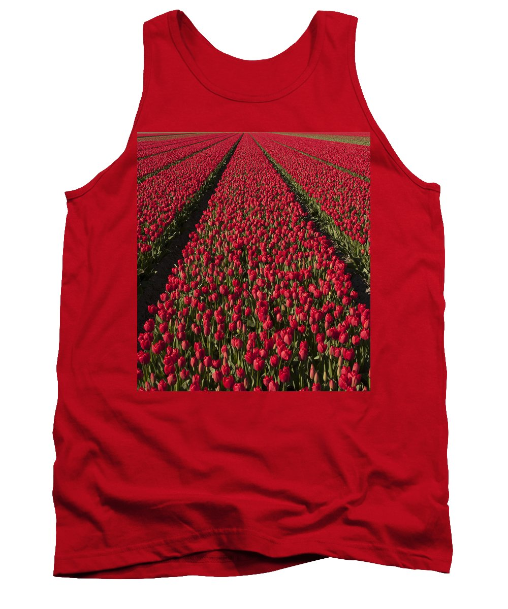 Netherlands Tank Top featuring the photograph Dutch Tulips Second Shoot Of 2015 Part 1 by Alex Hiemstra