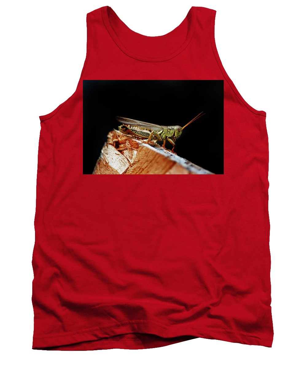 Tank Top featuring the photograph Grasshopper by Absorb Productions