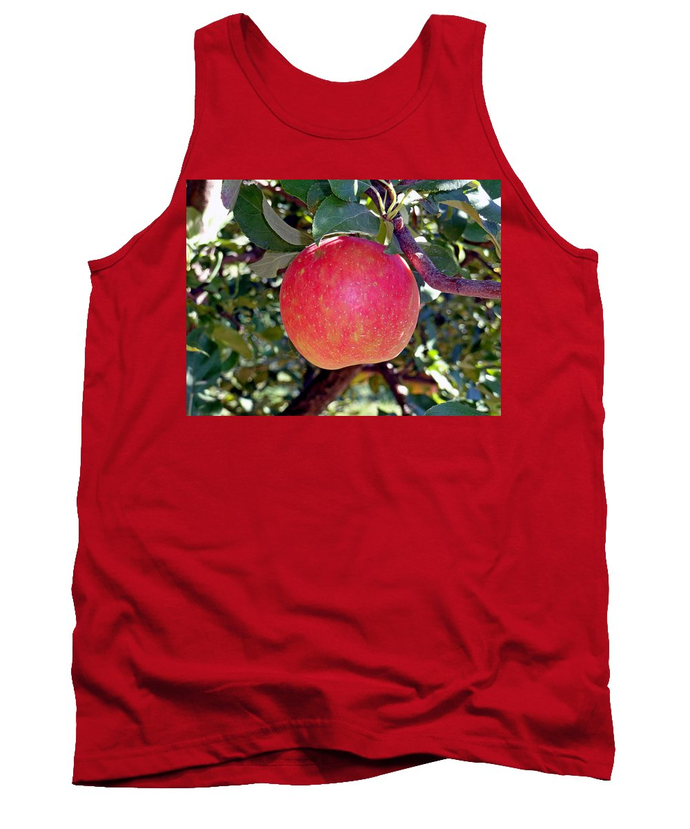Apple Tank Top featuring the photograph Honey Crisp Solo by Robert Meyers-Lussier
