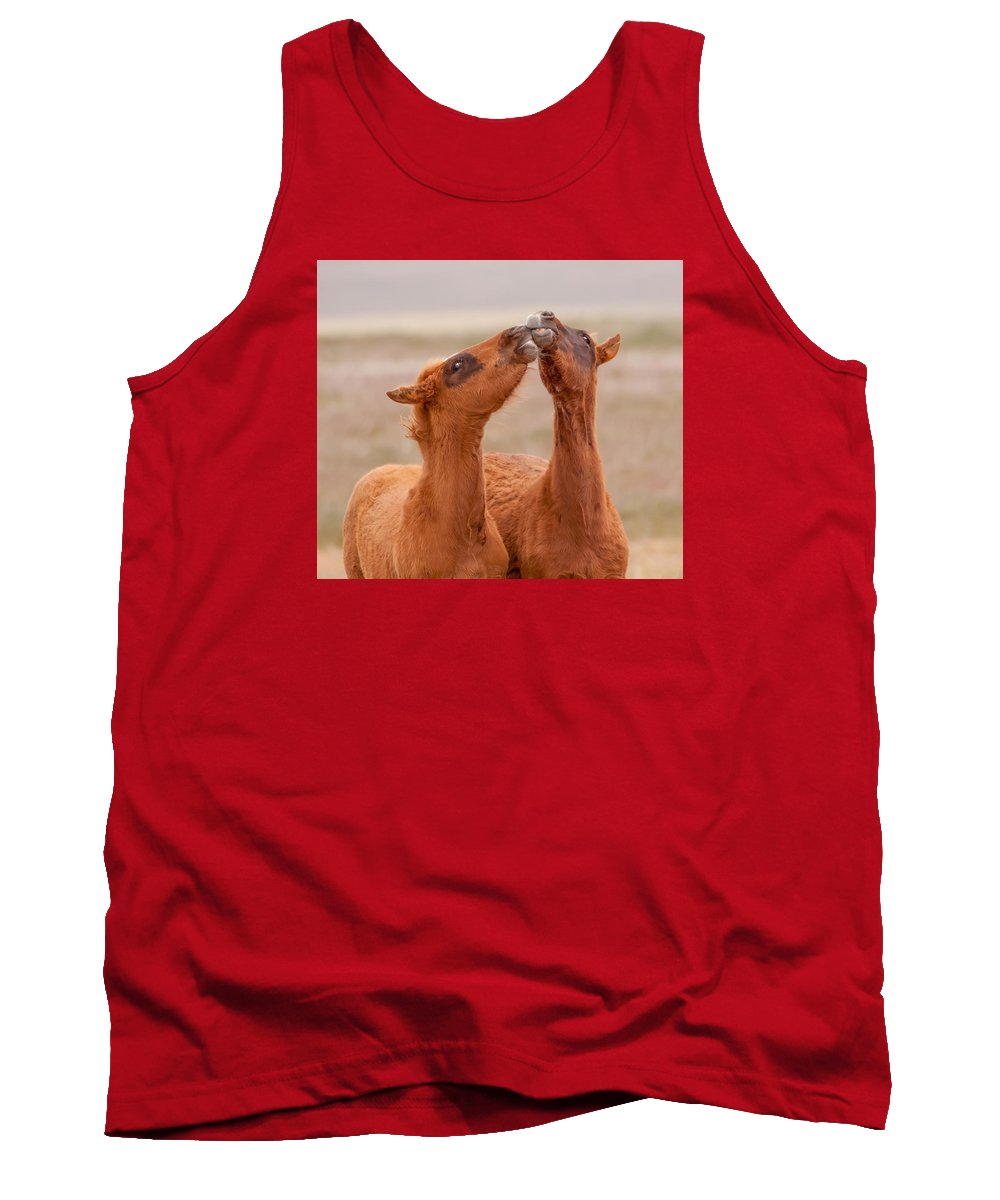 Wild Horse Tank Top featuring the photograph Kissing Bandits by Kent Keller