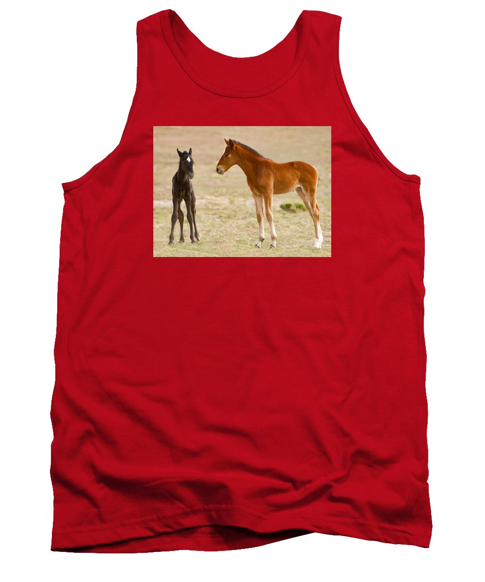 Wild Horse Tank Top featuring the photograph New Arrivals by Kent Keller