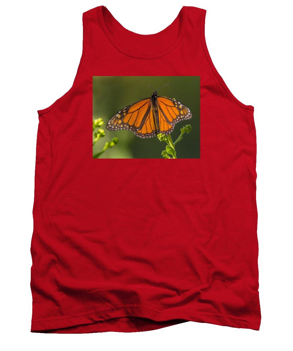 Monarch Tank Top featuring the photograph Orange Monarch by Sue Matsunaga