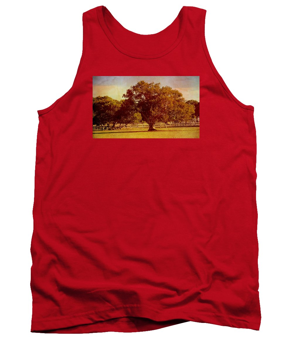 Trees Tank Top featuring the photograph Sunlit Landscape by Georgiana Romanovna