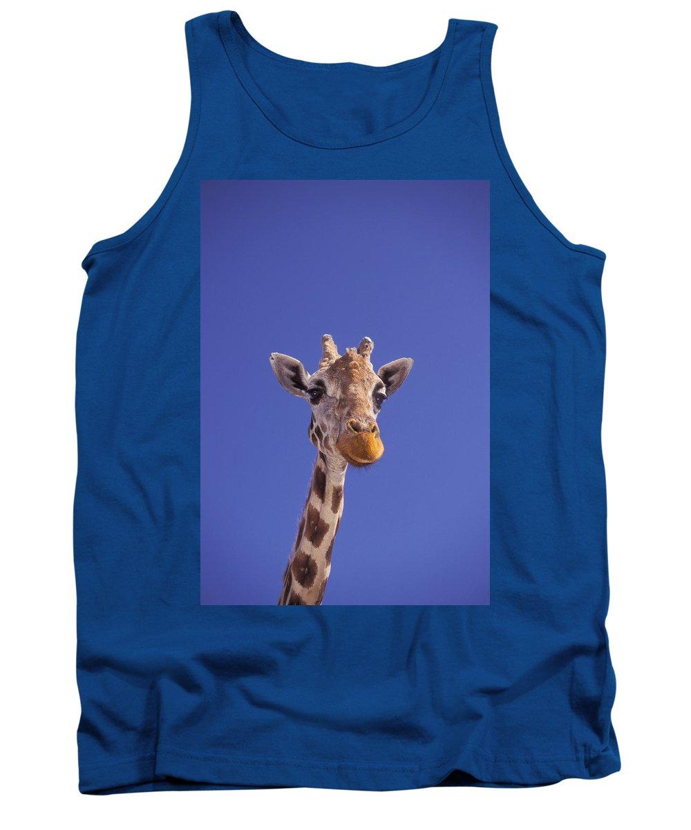 Animal Tank Top featuring the photograph Masai Giraffe, Serengeti, Africa by Thomas Kitchin & Victoria Hurst