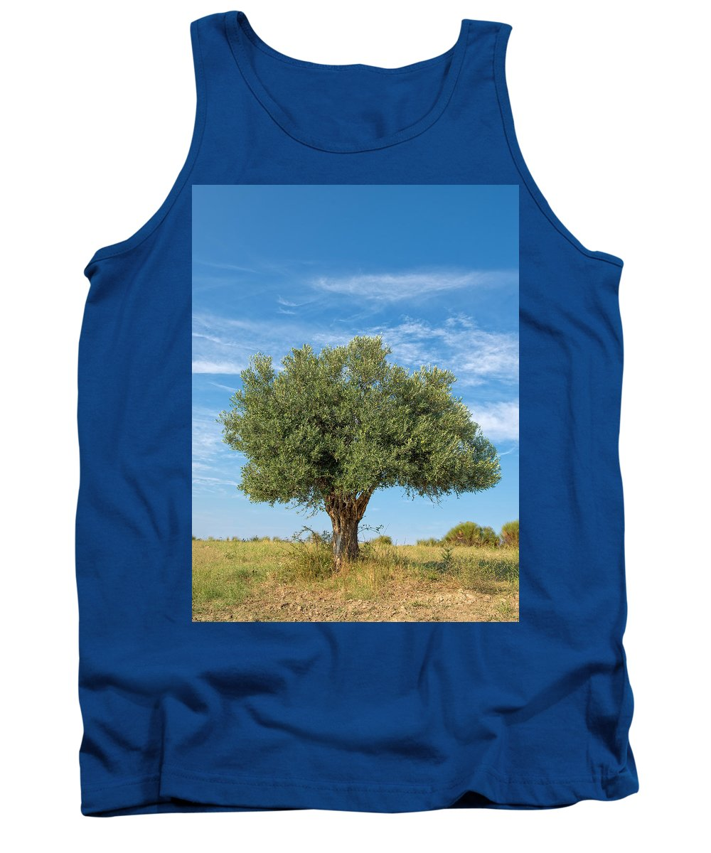 Olea Europaea Tank Top featuring the photograph Olive Tree by Roy Pedersen