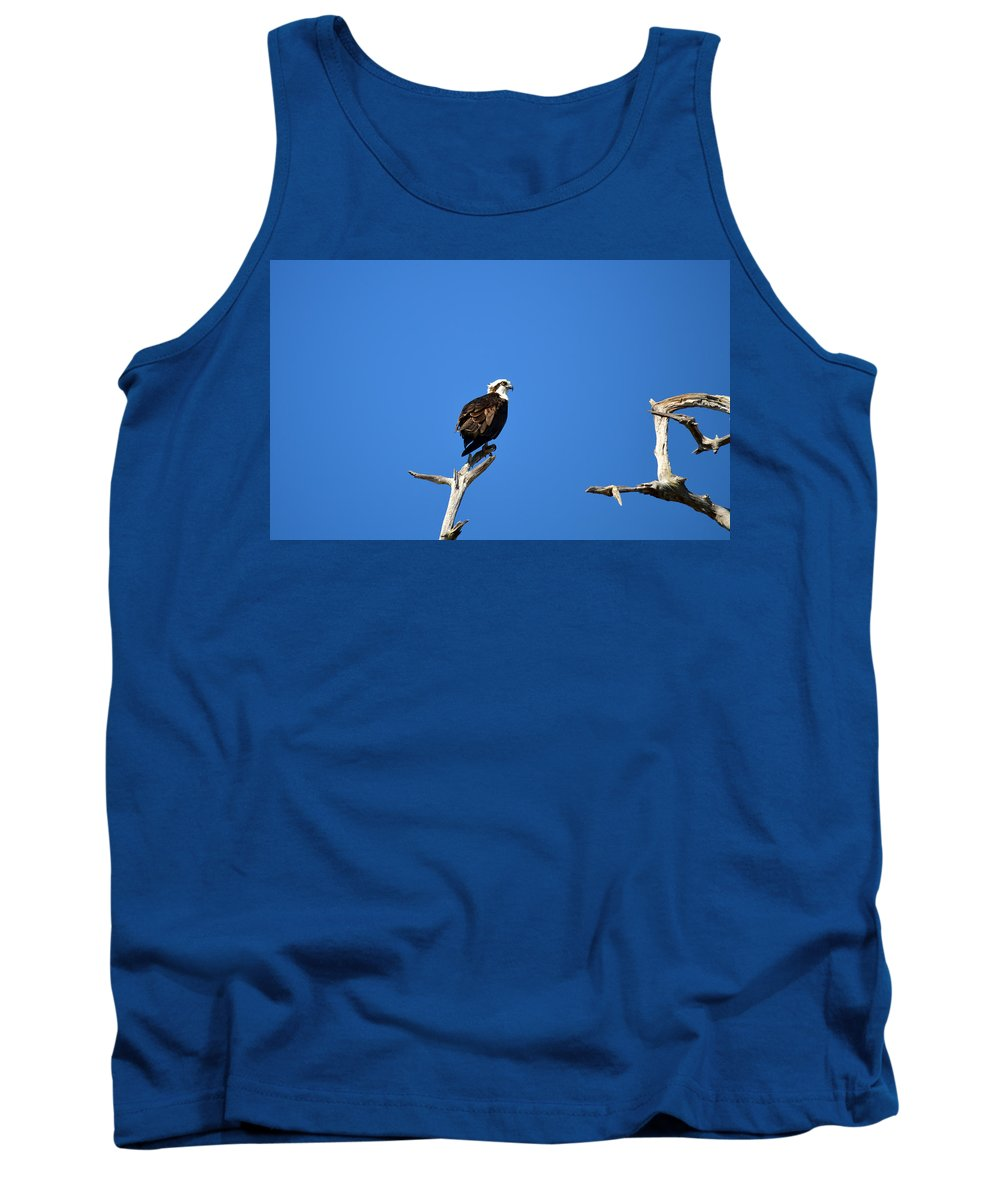 Osprey Tank Top featuring the photograph High Up by Linda Kerkau
