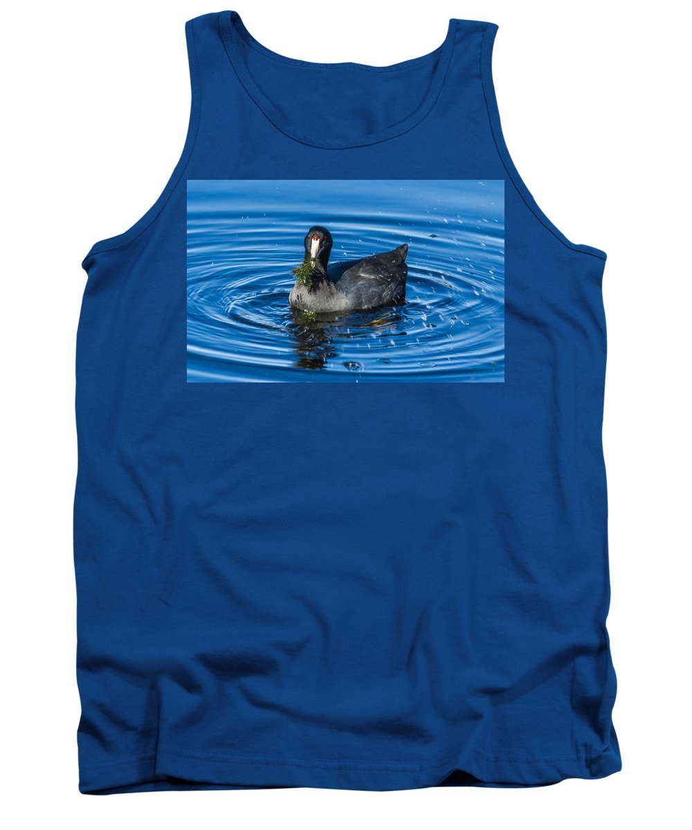 Bird Tank Top featuring the photograph American Coot by Jane Luxton