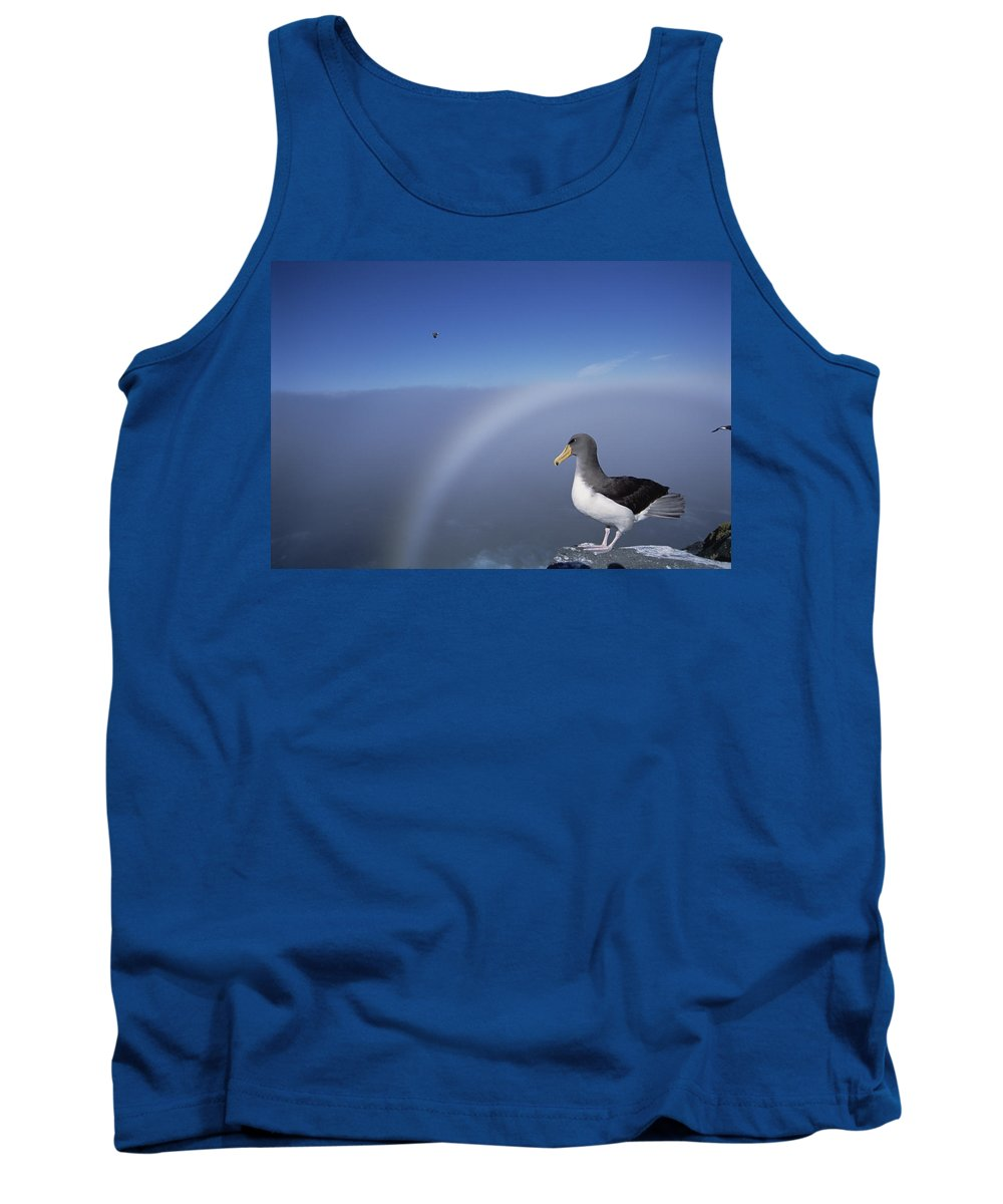Feb0514 Tank Top featuring the photograph Chatham Albatross On Cliff Edge Chatham by Tui De Roy