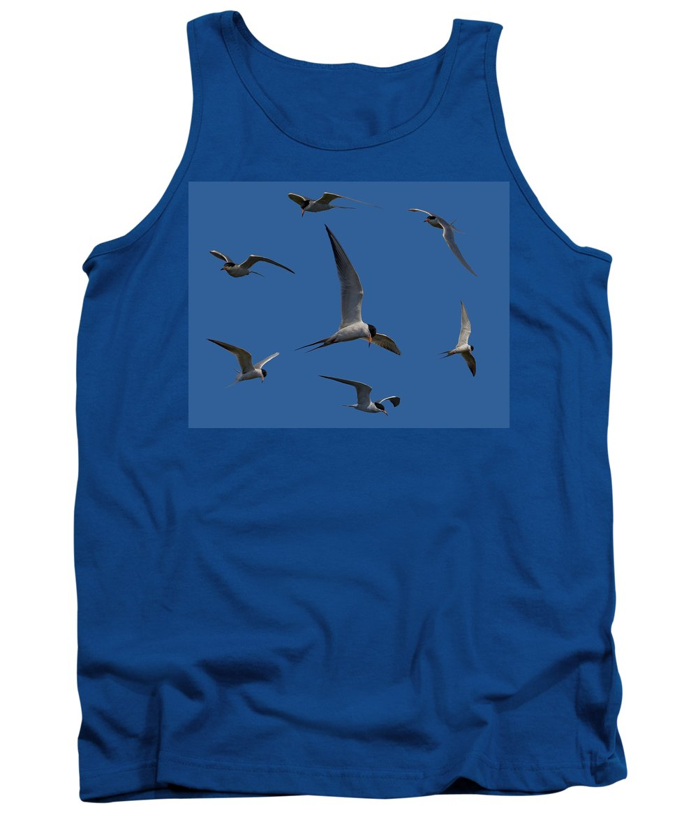 Tern Tank Top featuring the photograph Common Terns Collage by Ernie Echols