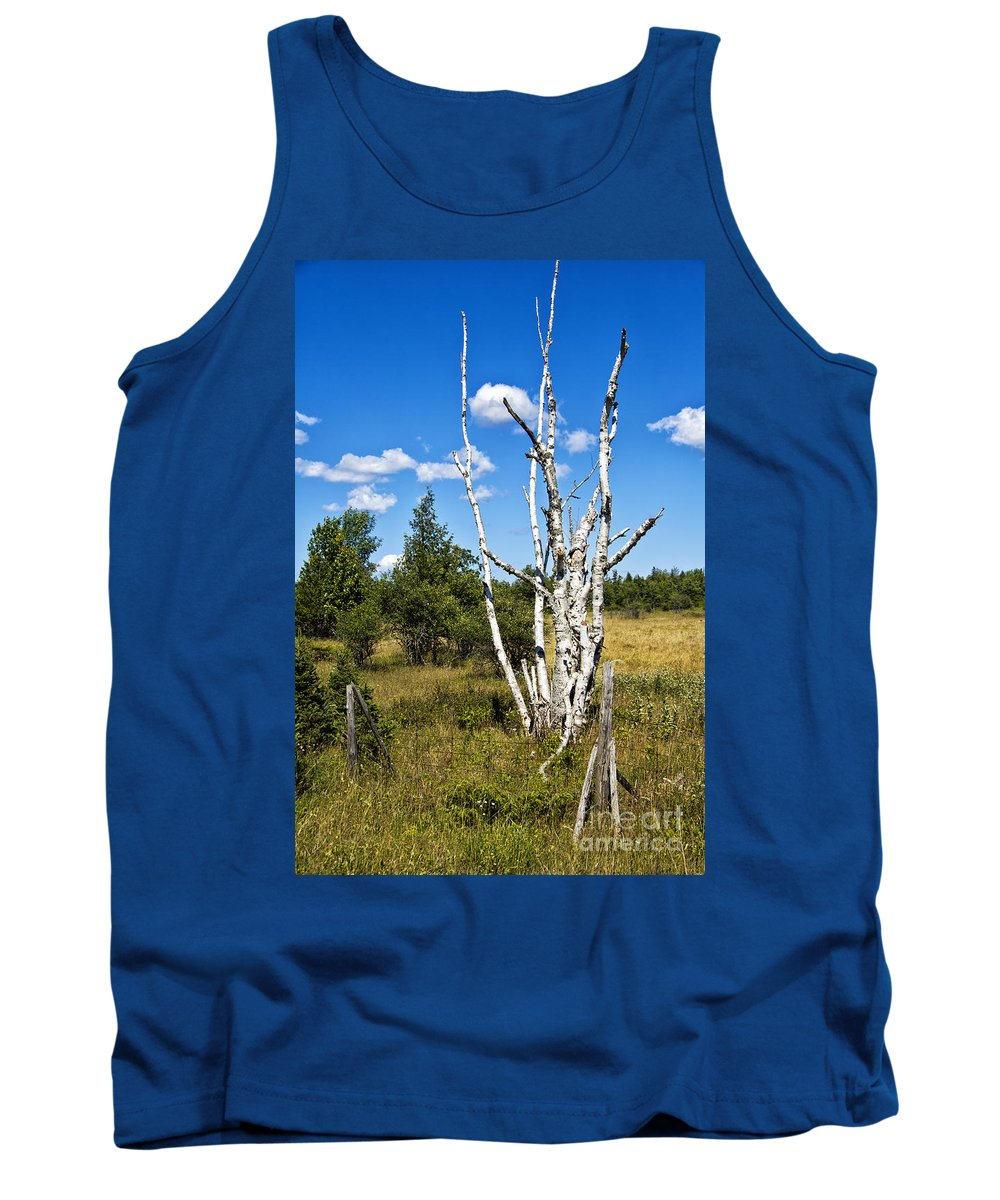 Timothy Hacker Tank Top featuring the photograph Dead Birch Trees by Timothy Hacker