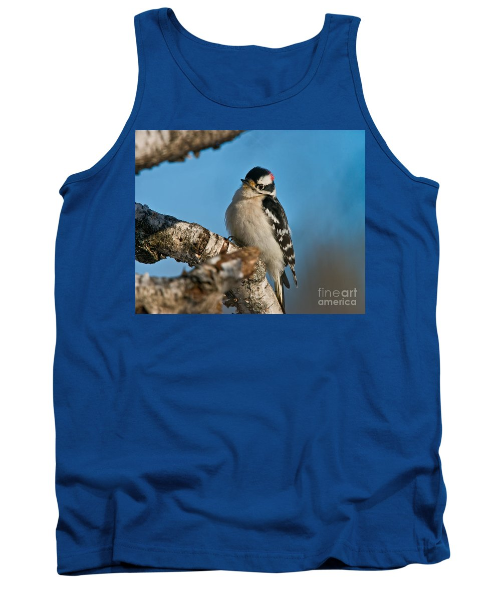 Downy Woodpecker Tank Top featuring the photograph Downy Woodpecker Pictures 23 by World Wildlife Photography