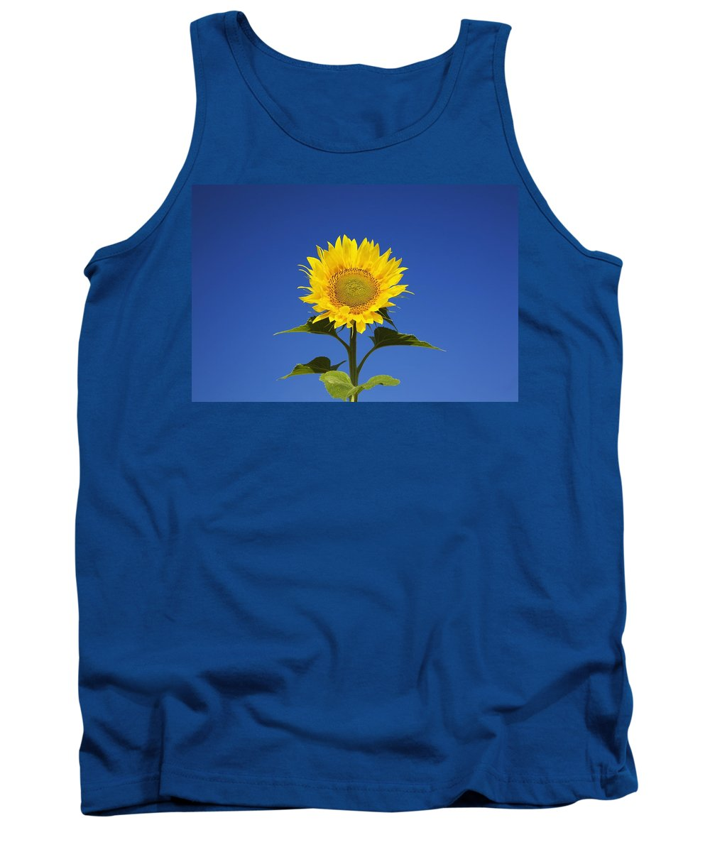 Blue Sky Tank Top featuring the photograph Laval, Quebec, Canada Sunflower by Perry Mastrovito
