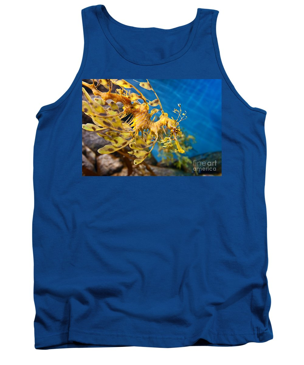 Monterey Bay Aquarium Photographs Tank Tops