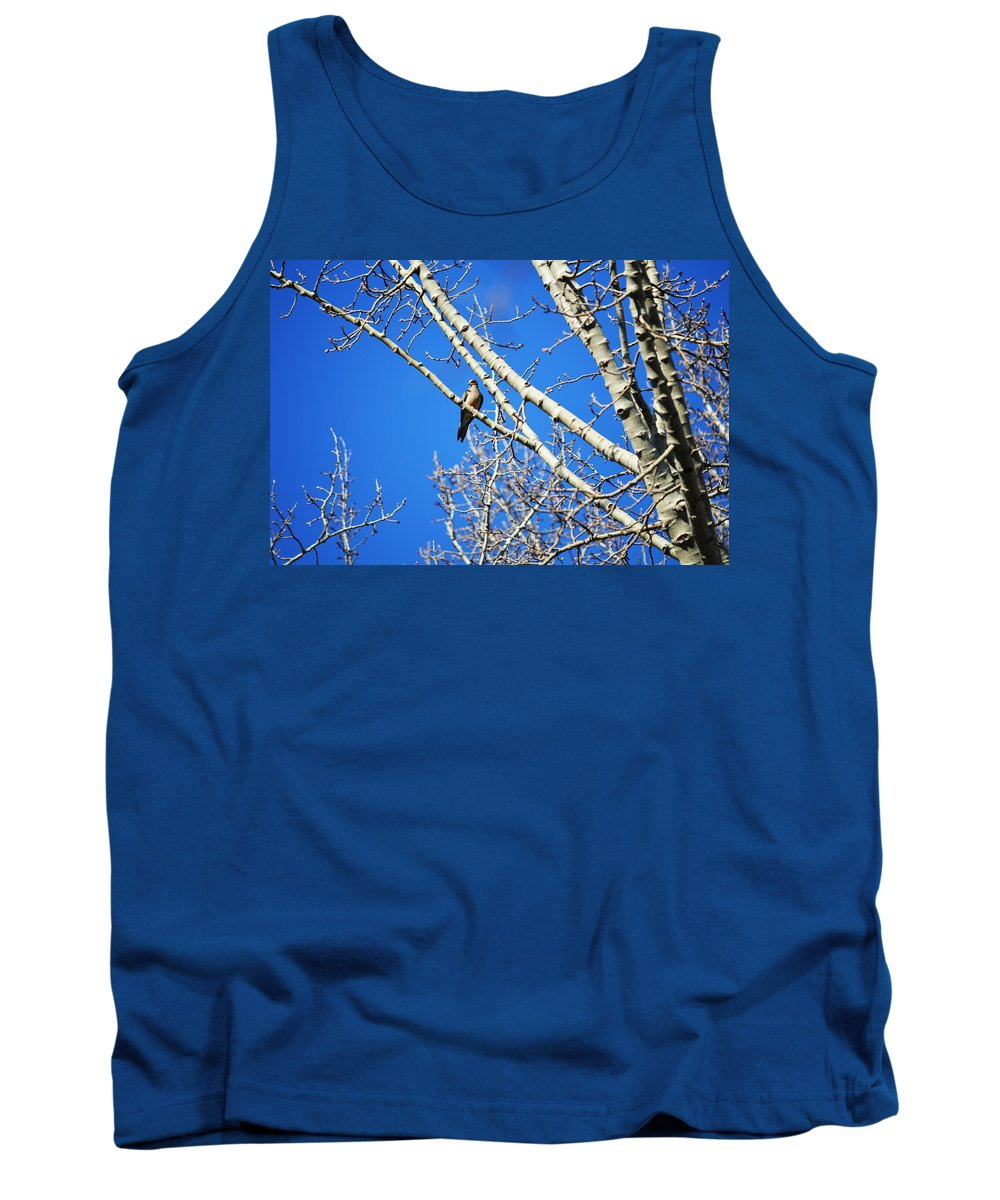 Michigan Tank Top featuring the photograph Mourning Dove by Linda Kerkau