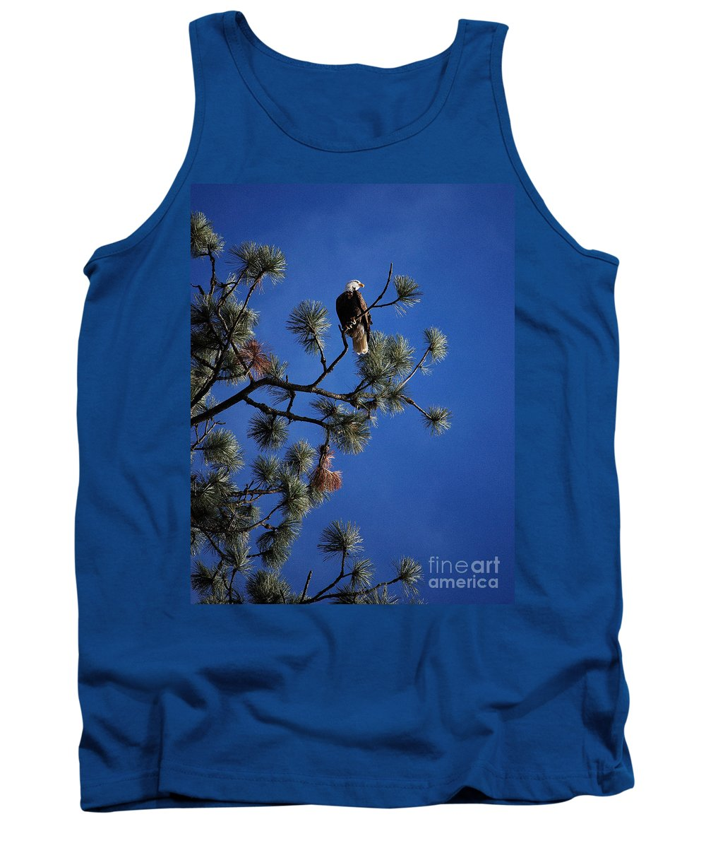 Bald Eagle Tank Top featuring the photograph Perched II by Sharon Elliott