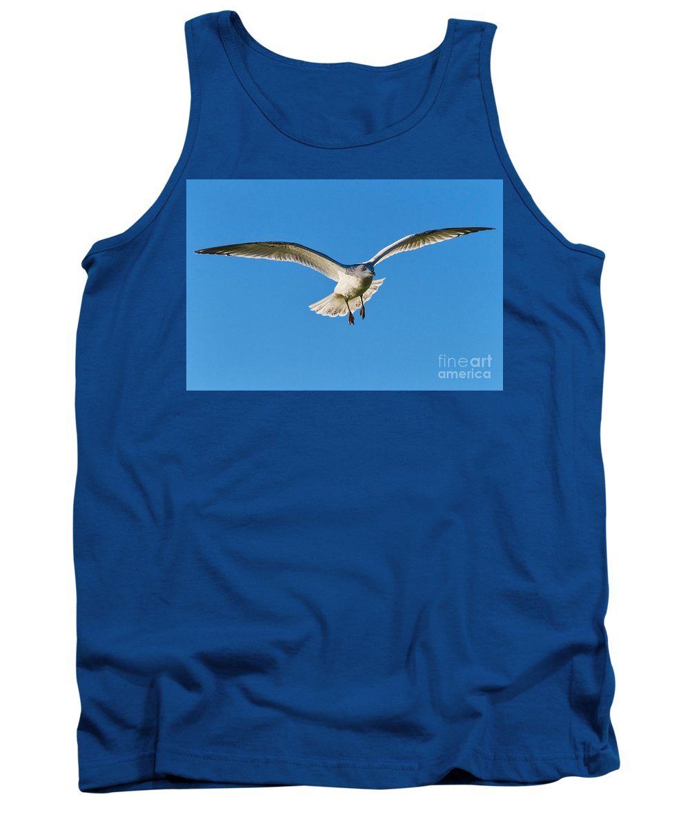 Gull Tank Top featuring the photograph Soaring by Susie Peek
