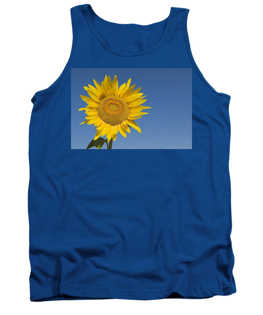 Blooming Tank Top featuring the photograph Sunflower, Helianthus Annuus by Michael Thornton