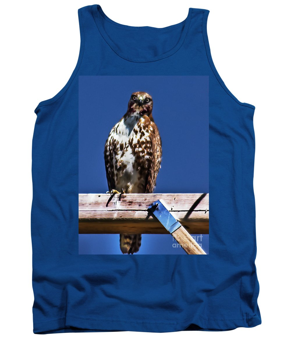 Buteo Swainsoni Tank Top featuring the photograph Swainson Hawk by Robert Bales