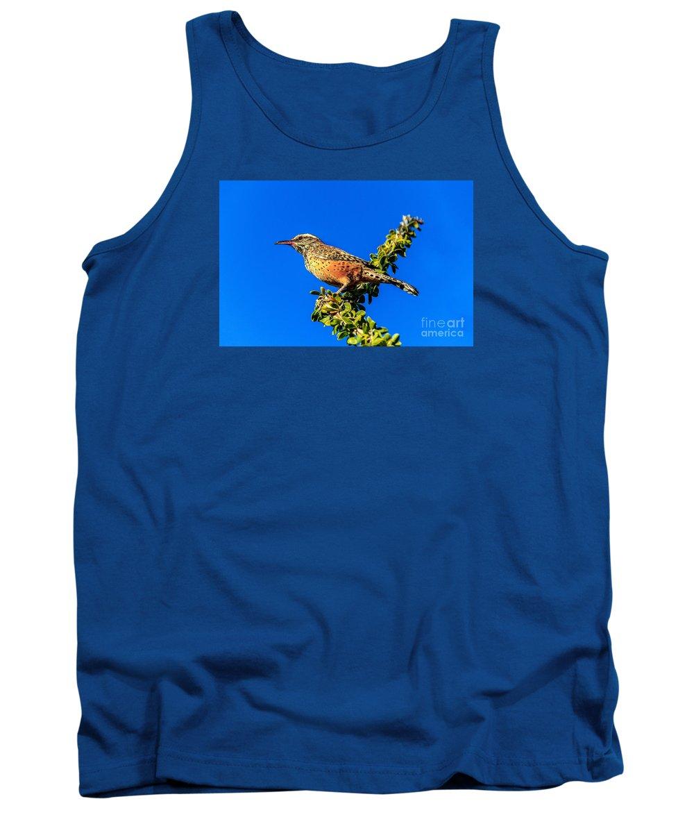 Bird Tank Top featuring the photograph The Cactus Wren by Robert Bales
