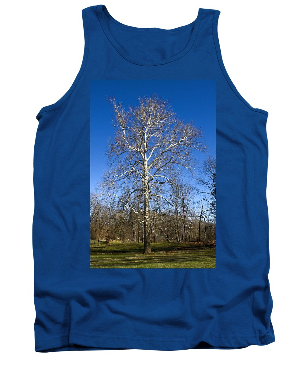 Winter Tree Tank Top featuring the photograph Winter Tree by Sally Weigand