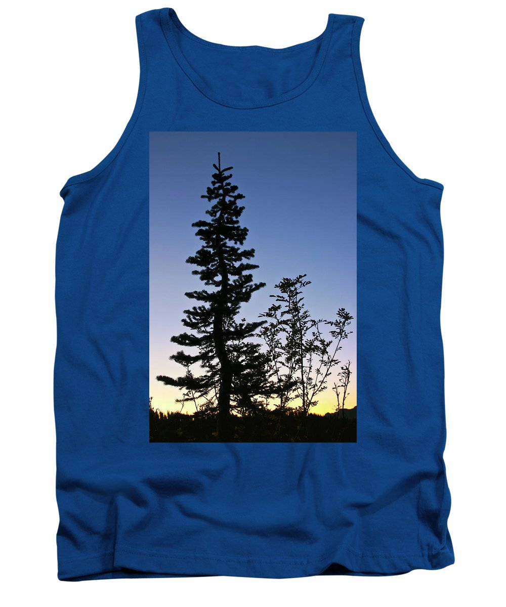 Tree Tank Top featuring the photograph Bent Conifer by Albert Seger