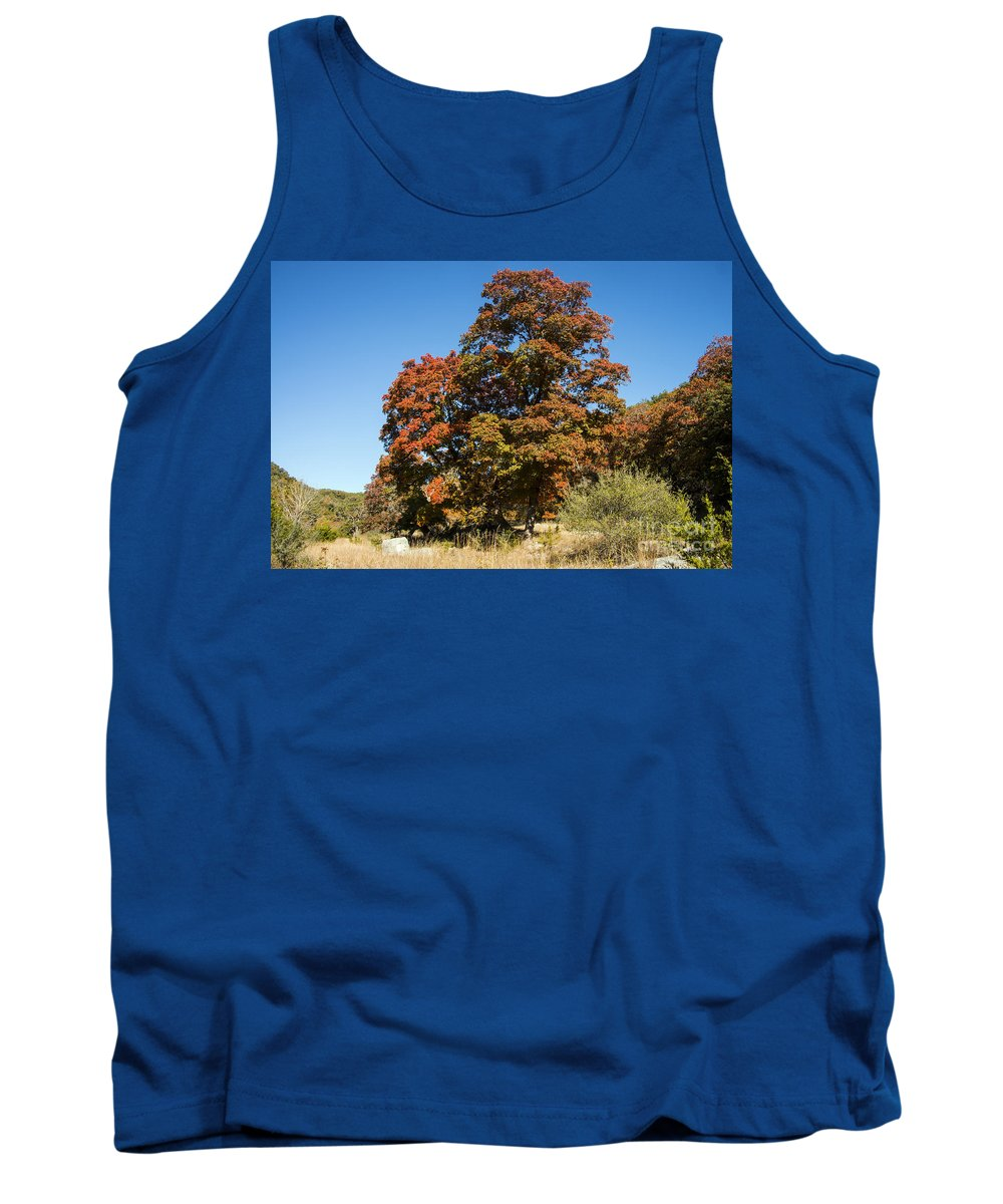 Lost Maples State Natural Area Texas Park Parks Maple Leaves Leaf Fall Autumn Tank Top featuring the photograph Changing Maple Colors by Bob Phillips