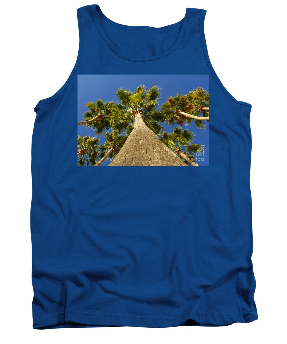 Florida. Palm Trees. Tropical Tank Top featuring the photograph Florida Palms by David Lee Thompson