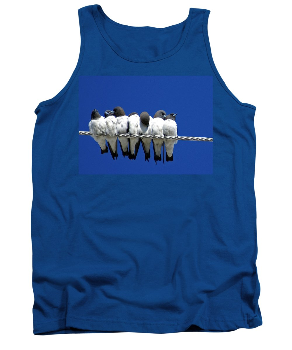 Animals Tank Top featuring the photograph Seven Swallows Sitting by Holly Kempe