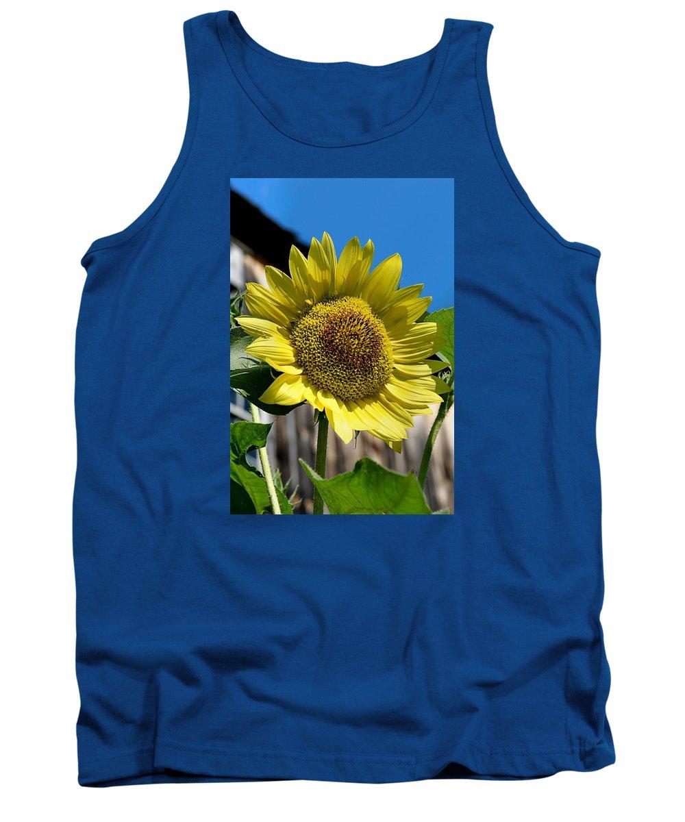 Sunflower Tank Top featuring the photograph Sunflower by DJ Florek