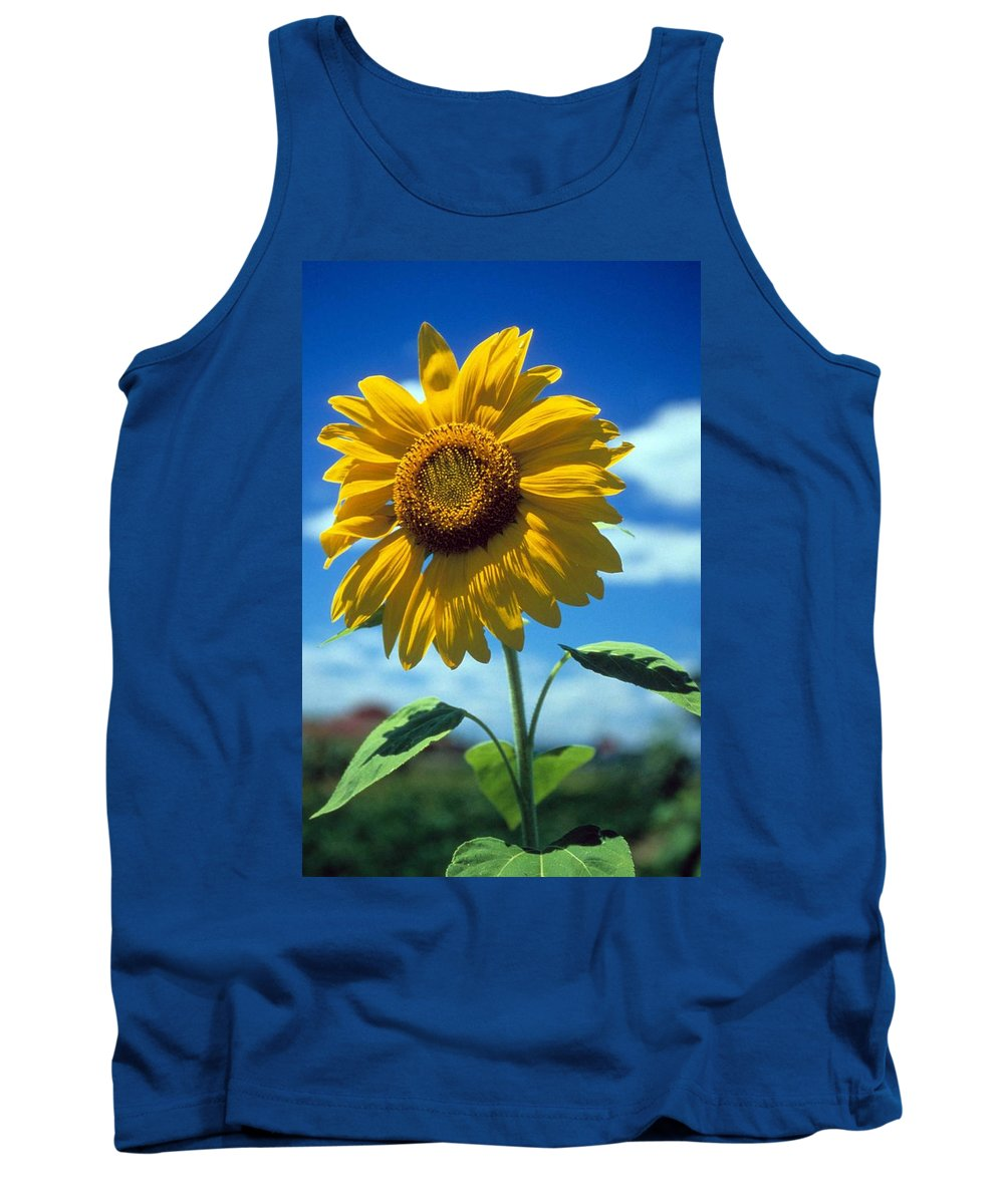Sussex County Tank Top featuring the photograph Sussex County Sunflower by Laurie Paci