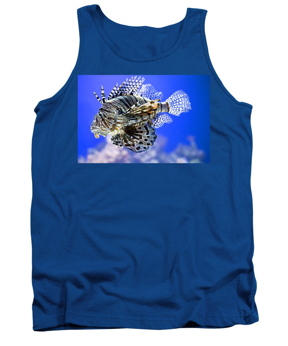 Aquarium Tank Top featuring the photograph Tiger Fish by Marilyn Hunt