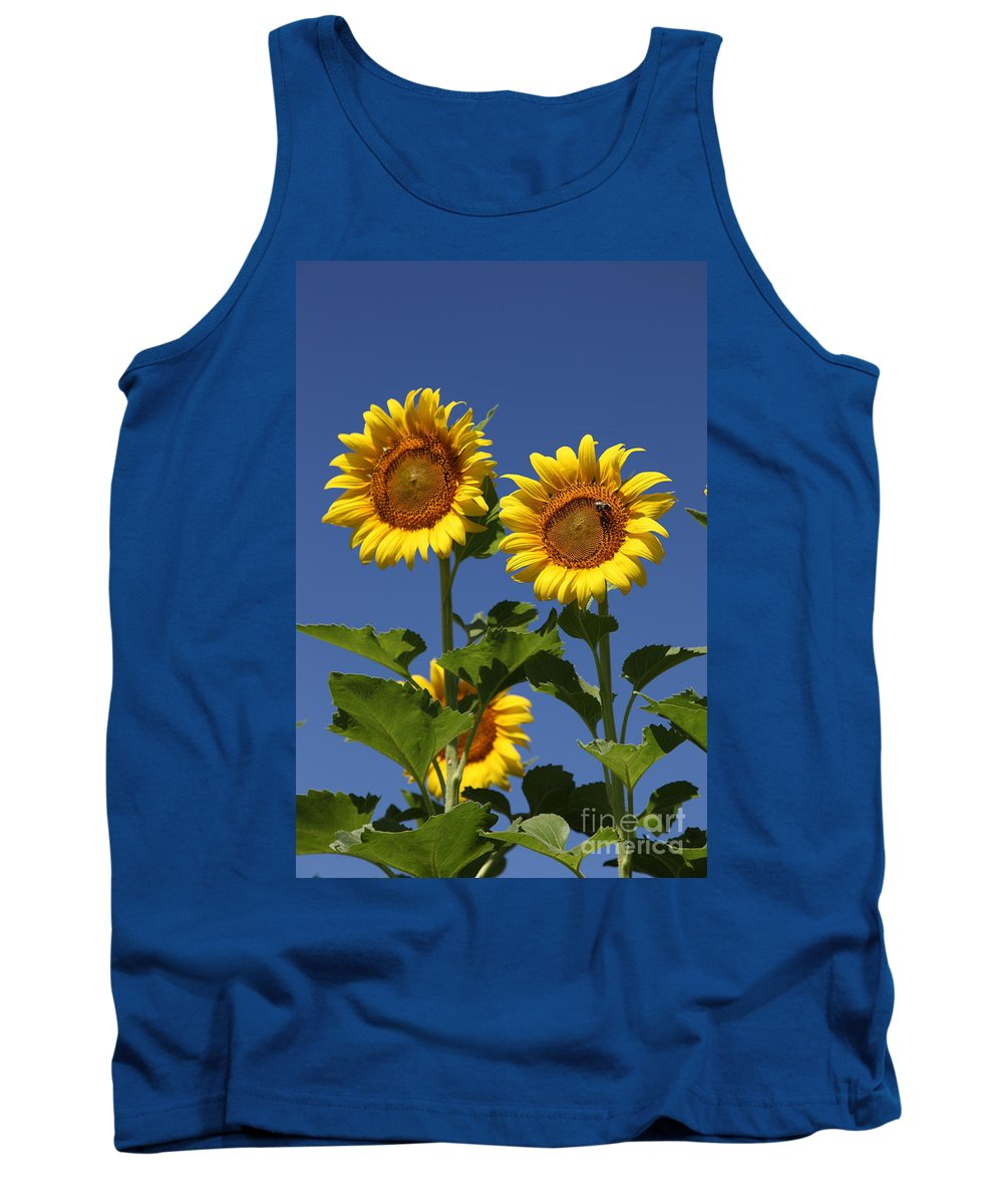 Sunflower Tank Top featuring the photograph Viewing The Past by Amanda Barcon