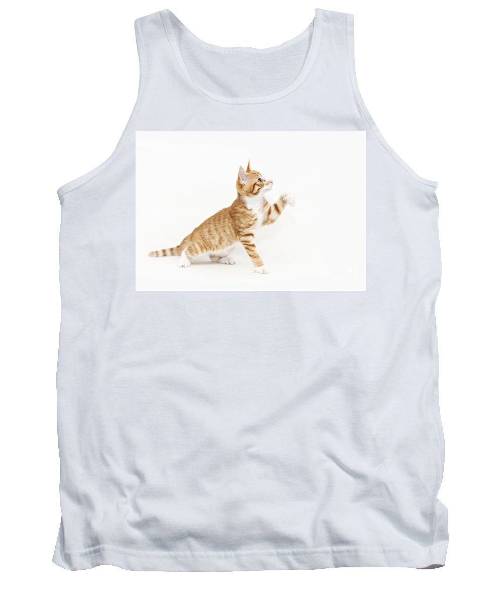 Kitten Tank Top featuring the photograph Ginger Kitten Waving Its Paw by Sophie McAulay