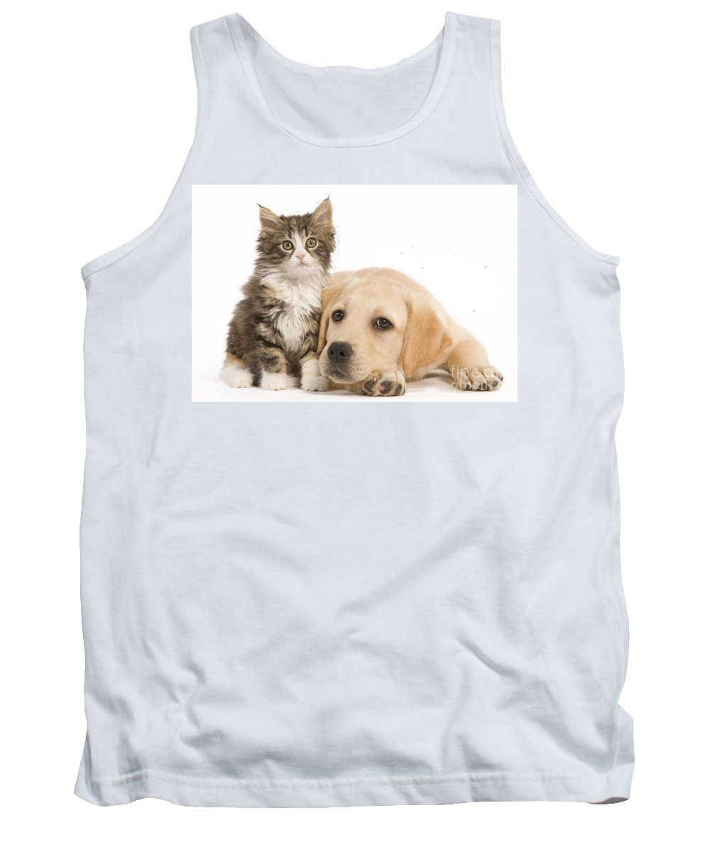 Cat Tank Top featuring the photograph Labrador And Forest Cat by Jean-Michel Labat