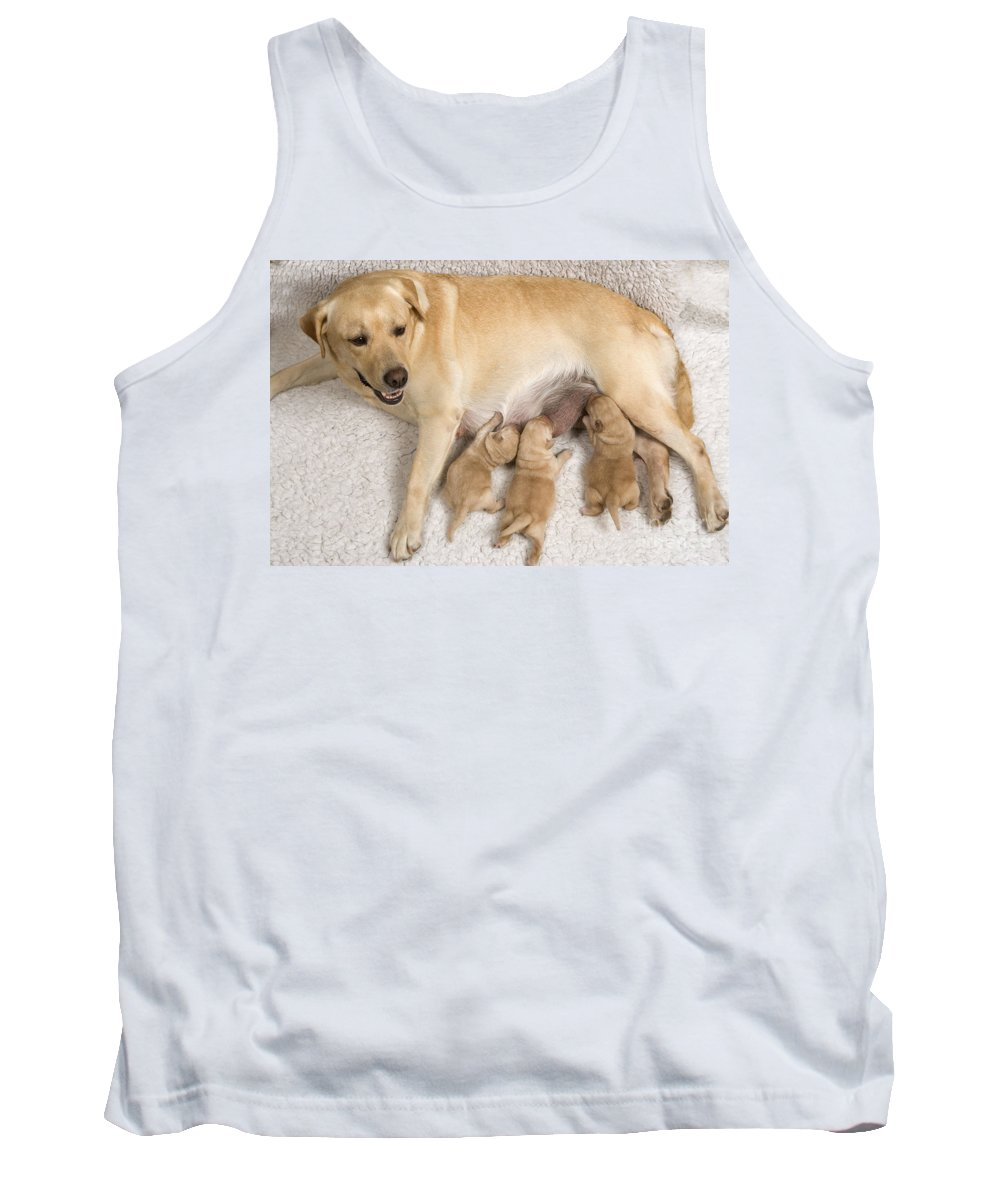 Labrador Retriever Tank Top featuring the photograph Labrador With Young Puppies by Jean-Michel Labat