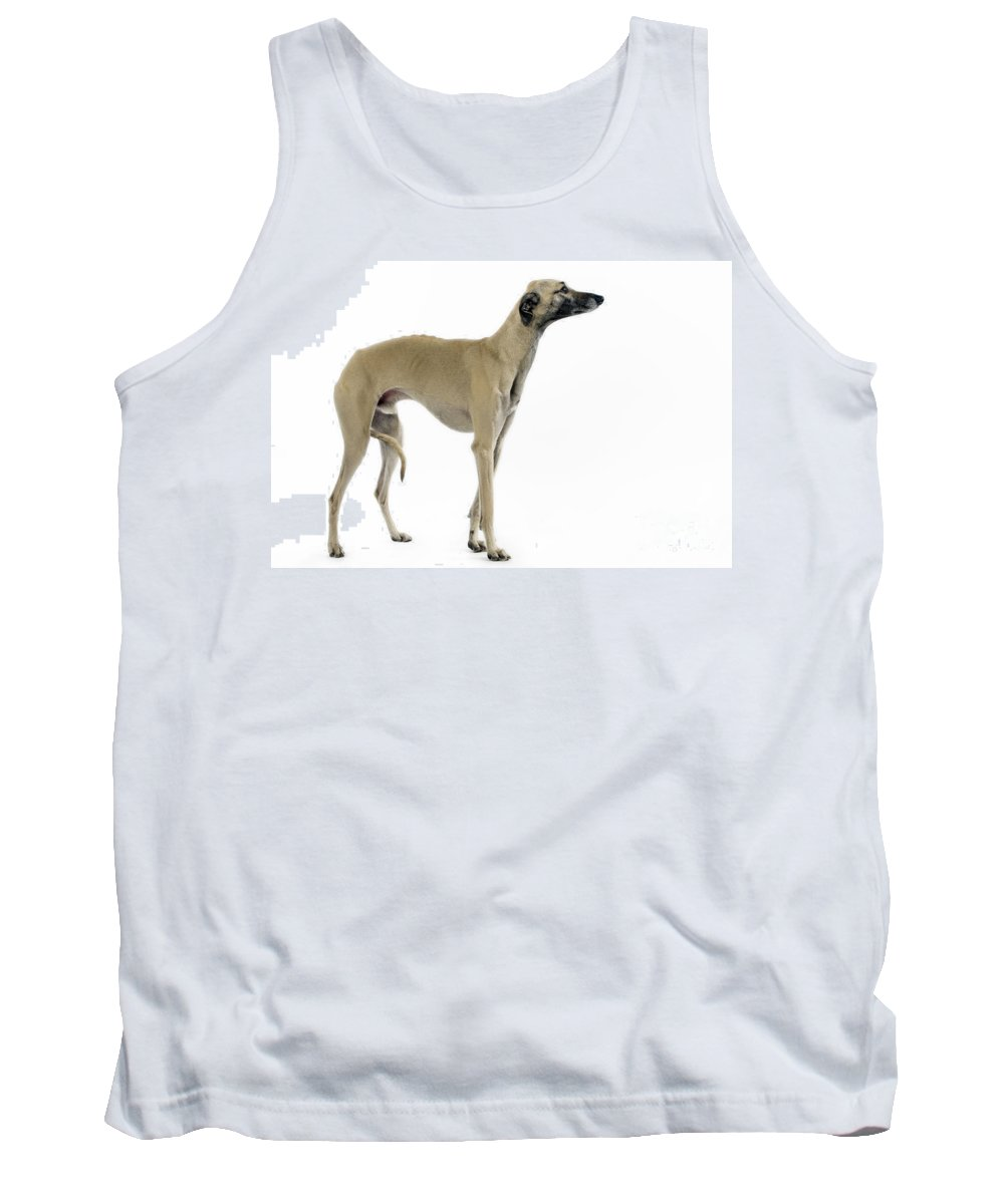 Breed Of Dog Tank Tops