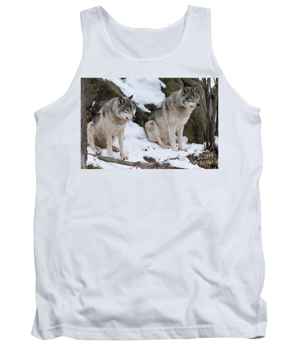 Timber Wolf Photography Tank Top featuring the photograph Timber Wolves by Wolves Only