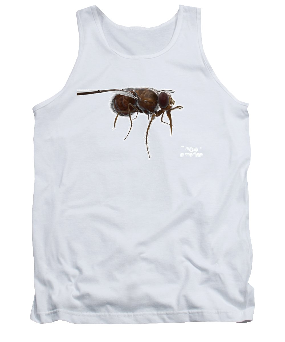 Problematic Tank Top featuring the photograph Tsetse Fly by Science Picture Co
