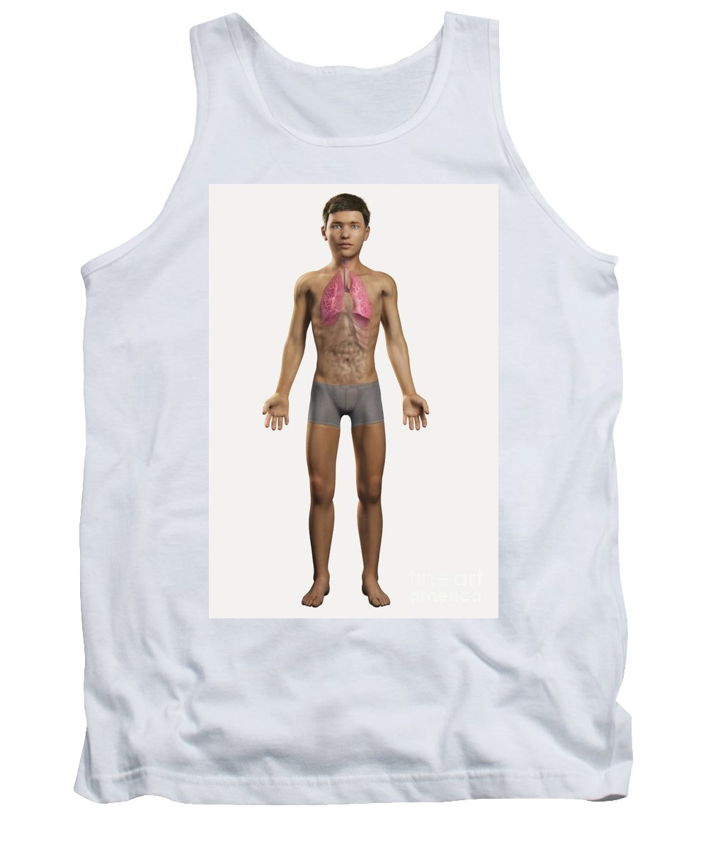 Transparent Tank Top featuring the photograph The Lungs Within The Body Pre-adolescent by Science Picture Co