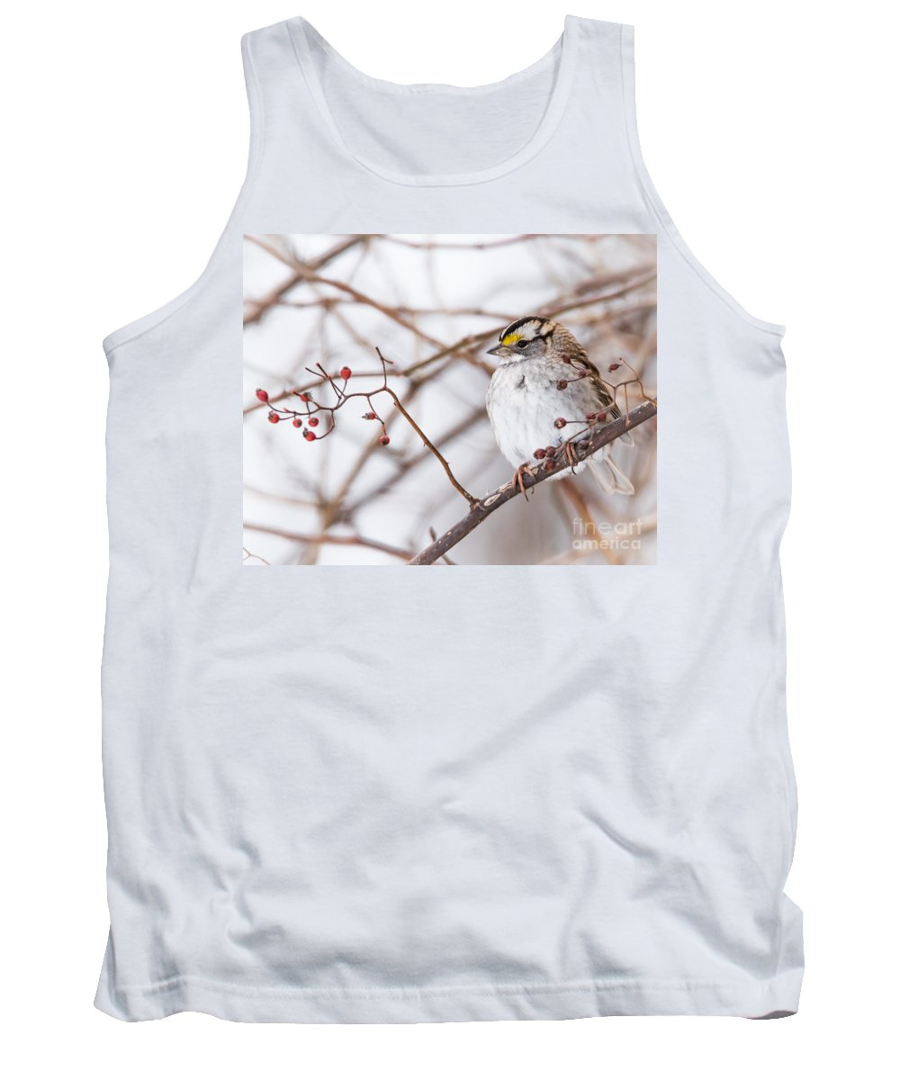 White-throated Sparrow Tank Top featuring the photograph White-throated Sparrow by Ronald Grogan