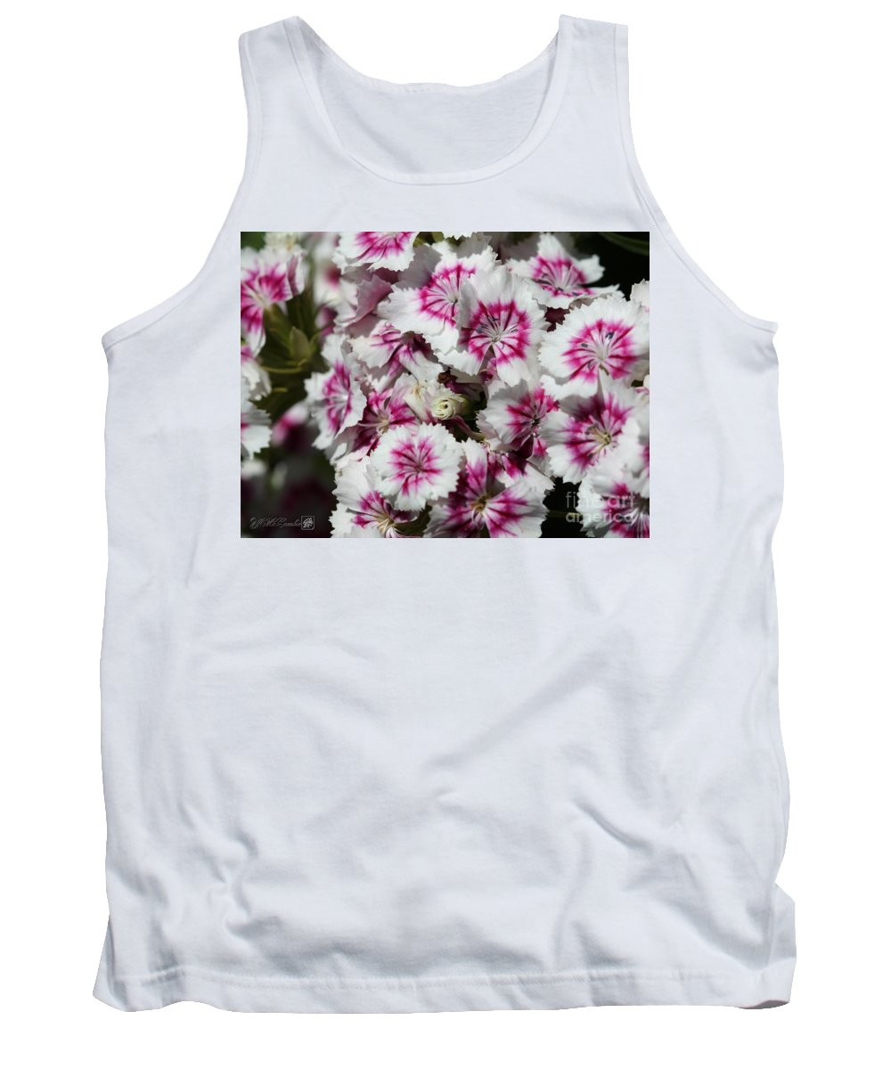 Mccombie Tank Top featuring the photograph Sweet William From The Super Duplex Bluepoint Mix by J McCombie
