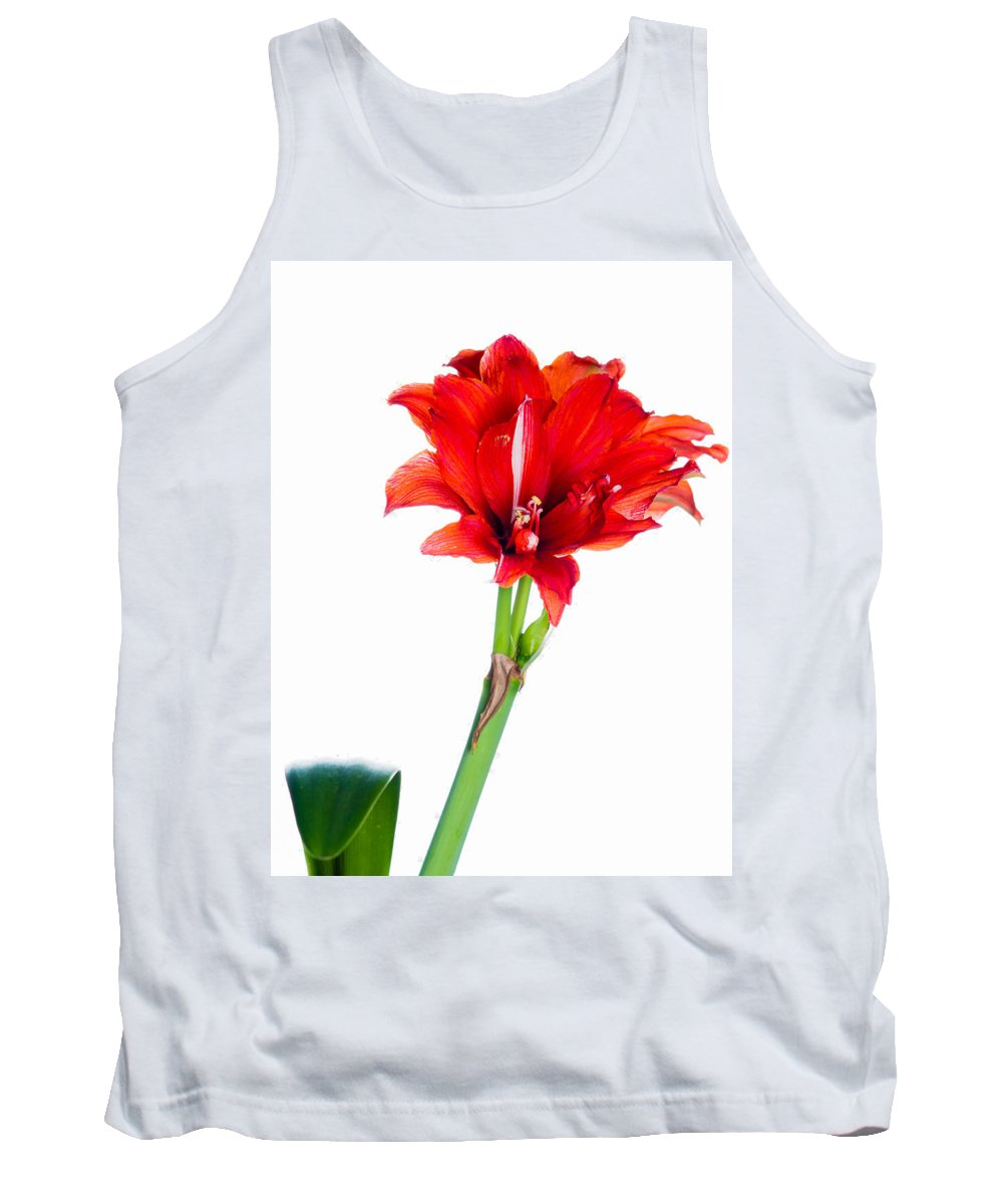 Amarillo Tank Top featuring the photograph Red Amaryllis by Mark Llewellyn